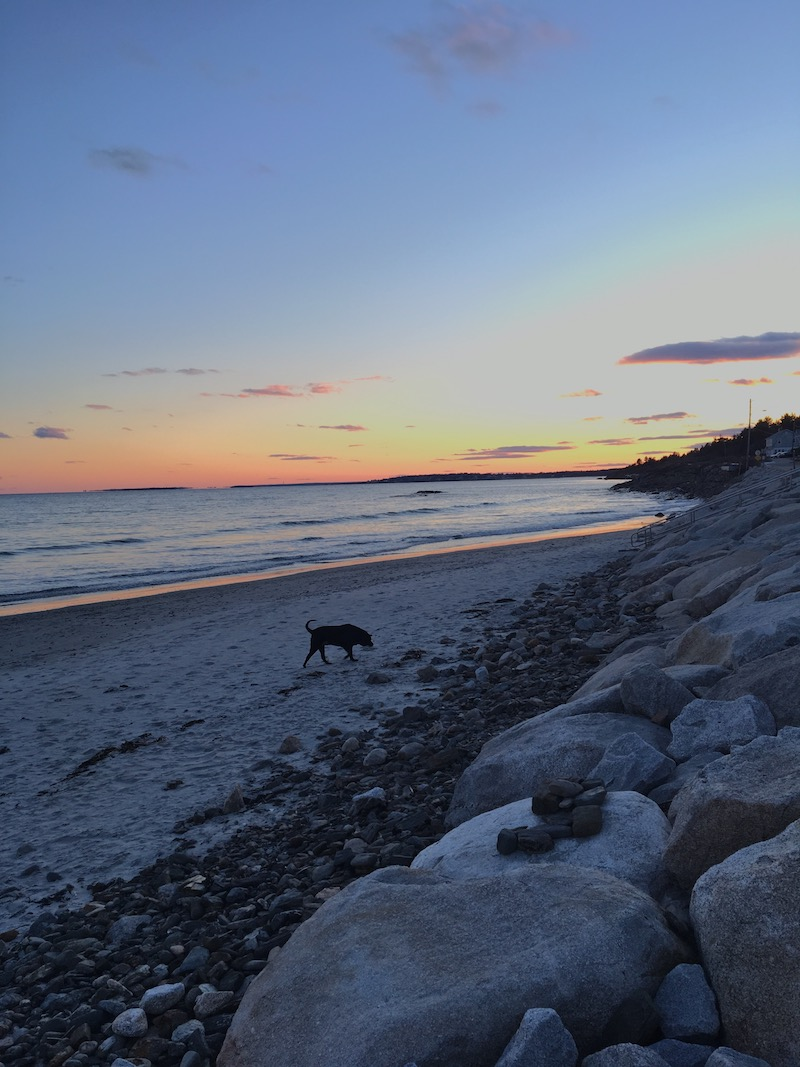 This time of year when there are more dogs on the beach than people