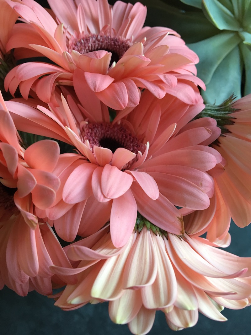 Gerbera daisies- they are just so pretty!