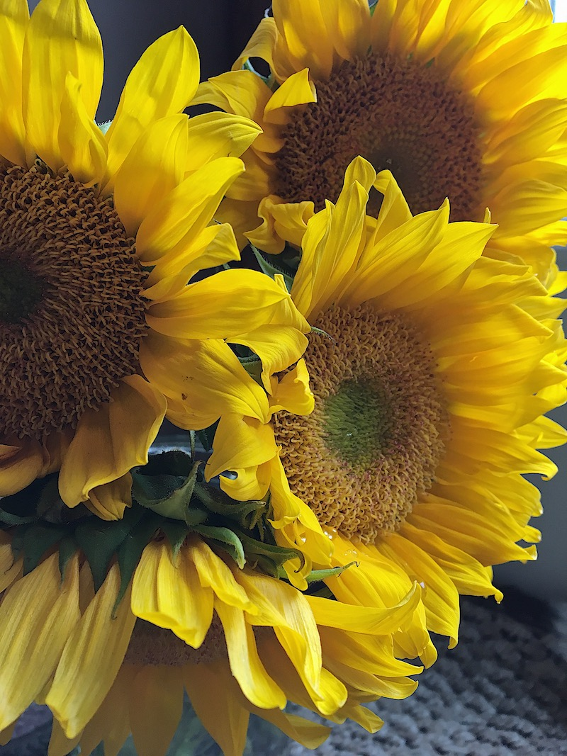 Sunflowers on a rainy day- not only are they my favorite flower, but they also bring sunny cheer to any gloomy day