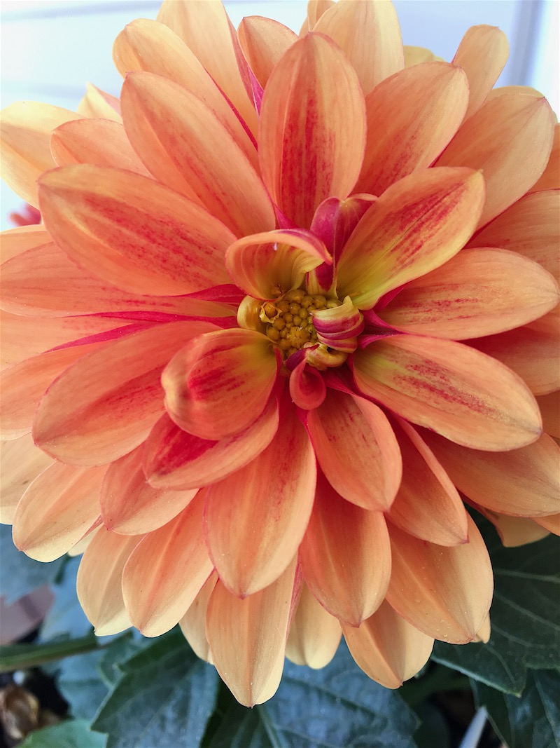 Beautiful blooms that beg you to literally stop and smell the flowers