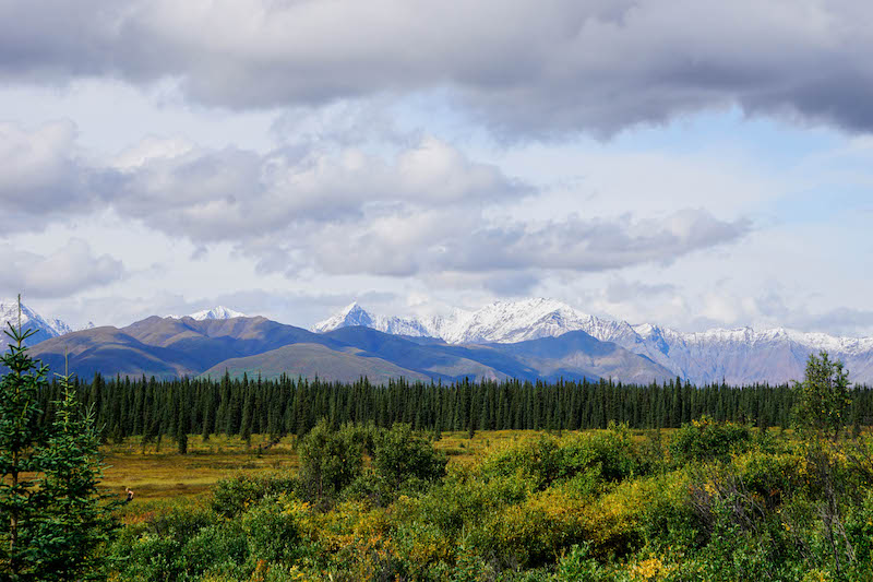 The jaw-dropping beauty of  Denali National Park  and its ability to make you realize how grand the world truly is