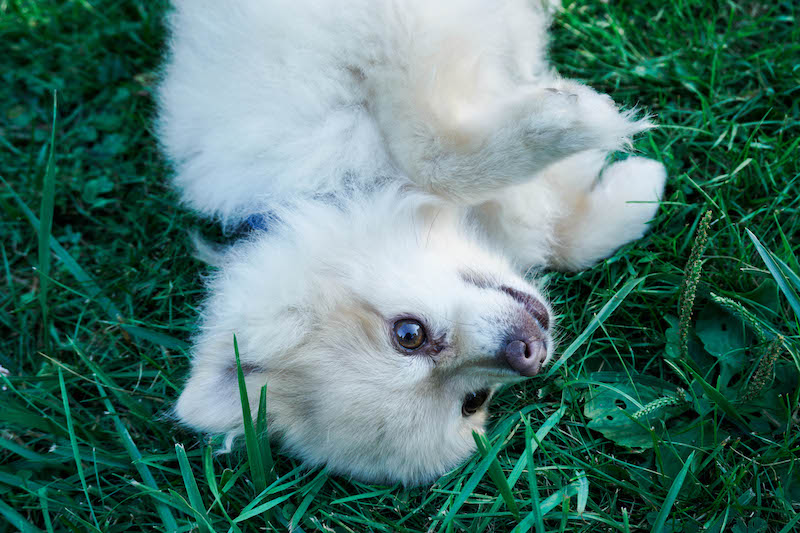 Laying in the grass with my favorite little pup