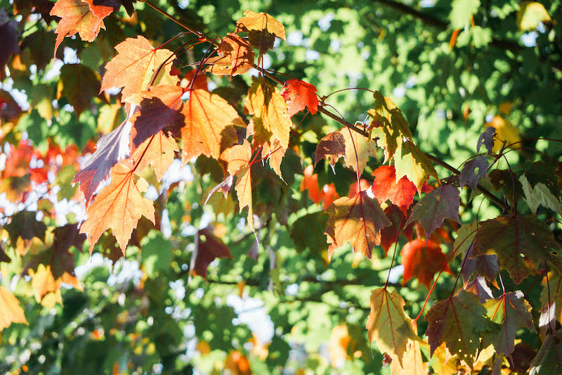 Sunshine and changing leaves