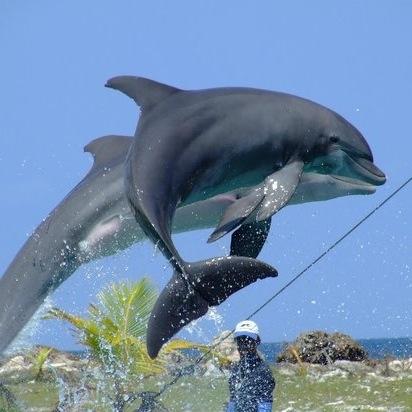 dolphin-cove.jpg