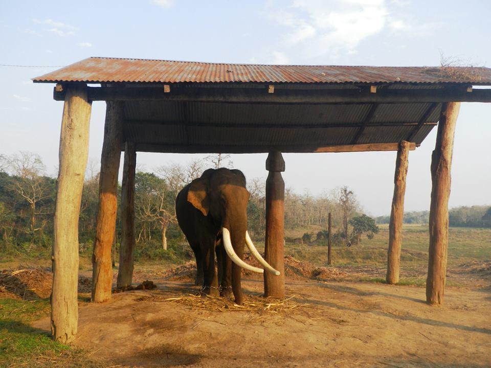 Pop Up Dinner Party in Nepal: Elephantt