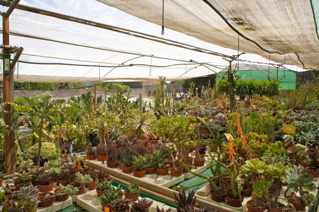 Cactus and succulet garden centre in Ibiza