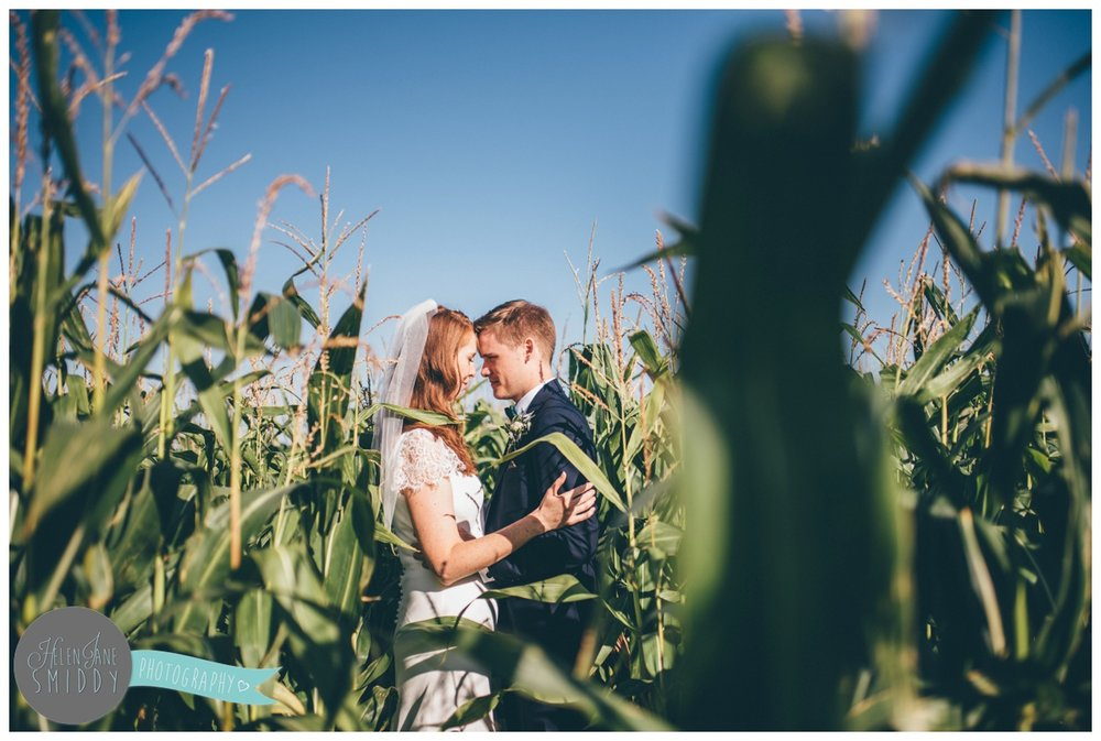 Newly married couple have their wedding photographs taken in a corn field.