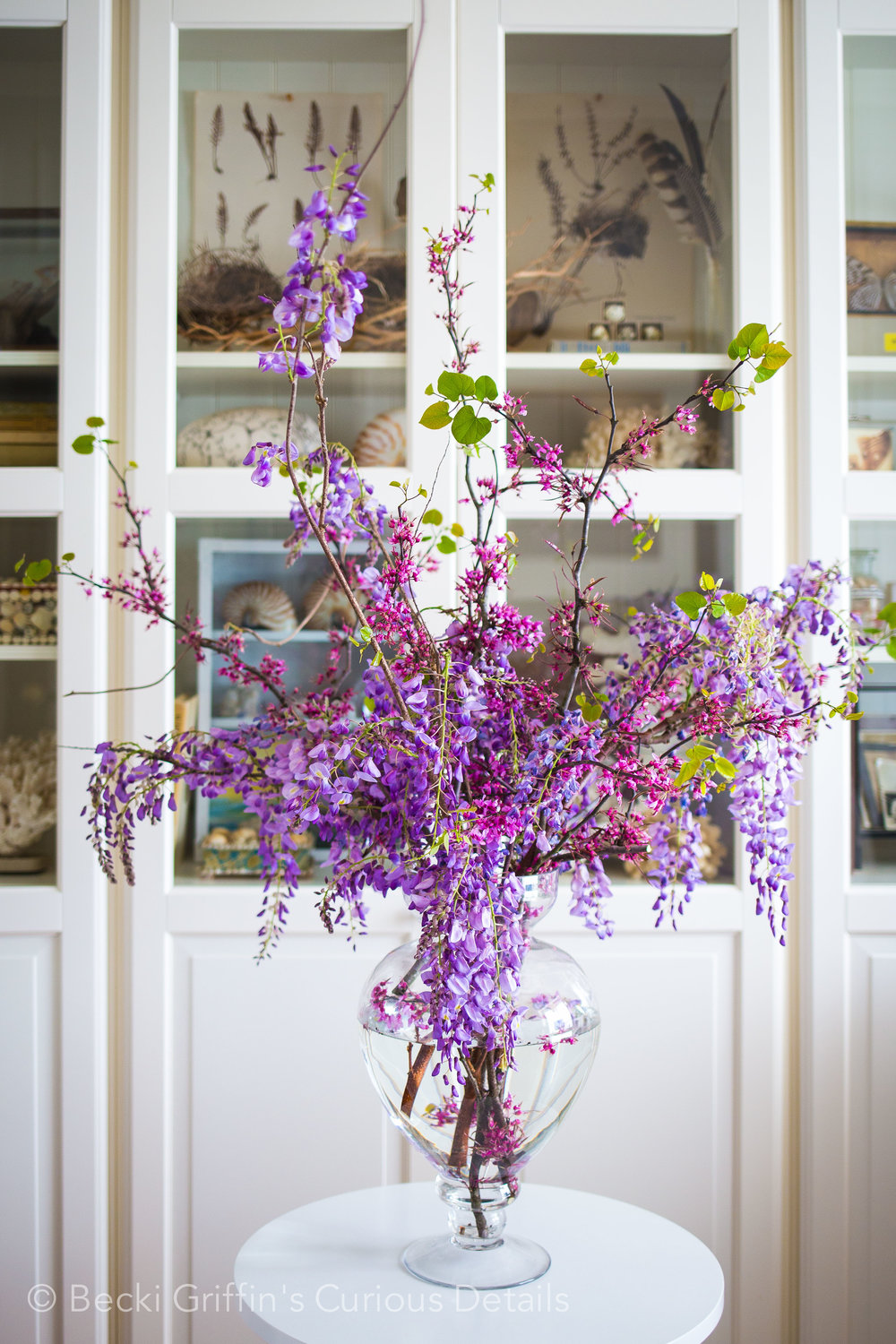 Wisteria: Becki Griffin's Curious Details