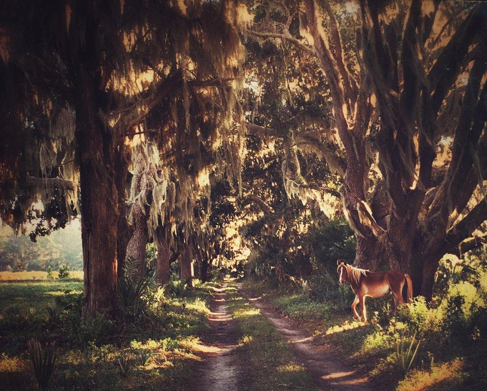 Becki Griffin's Curious Details:Cumberland Island