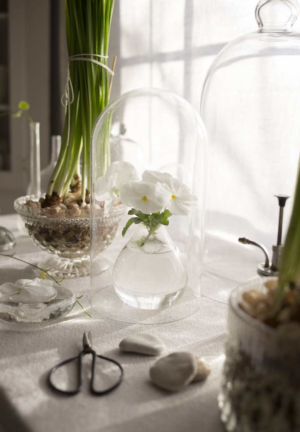 Becki Griffin's Curious Details Paperwhites
