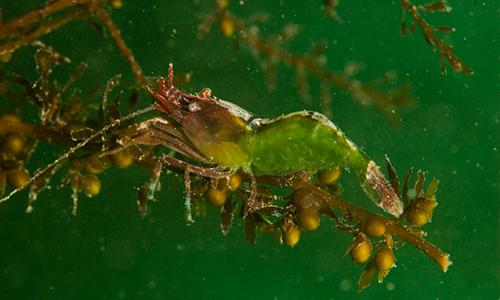 cedar-beach-pat-gunerson-shrimp-5.jpg