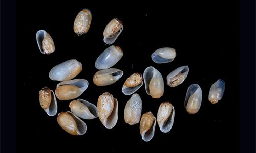 cedar-beach-rick-retusa-obtusa.jpg