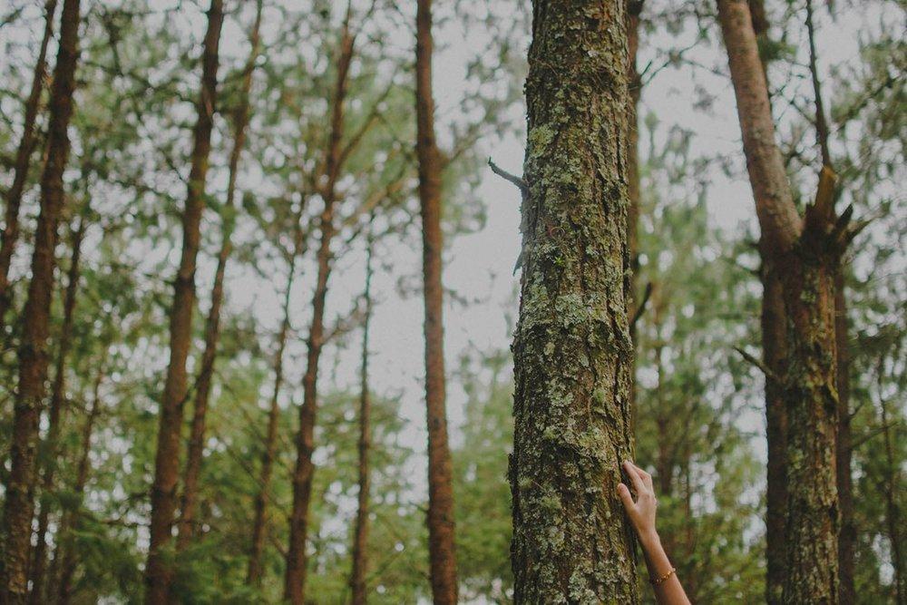 mireya-sesion-bosque27-1176x784.jpg