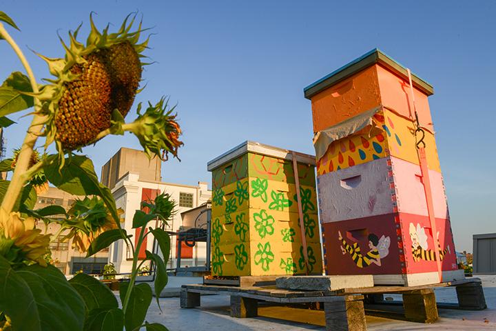 Bees4.jpg