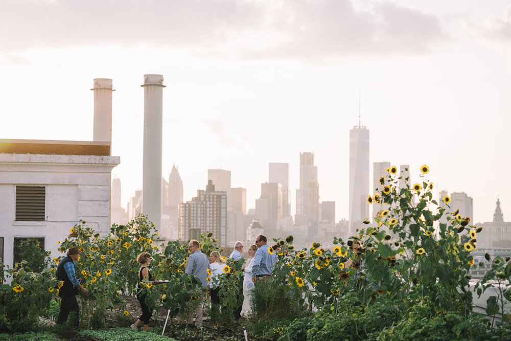 FARM TOURS - WEEKLY, MAY - OCTOBER LONG ISLAND CITY & BROOKLYN NAVY YARD