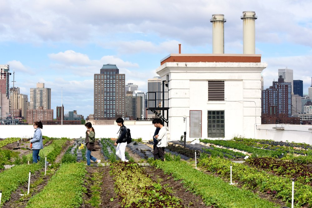 BOOK YOUR TOUR - Scroll through the calendar below to find tickets to an upcoming tour. Weekly tours take place at both the Brooklyn Navy Yard Farm and the Long Island City Farm. Tours begin May 1st, 2019.