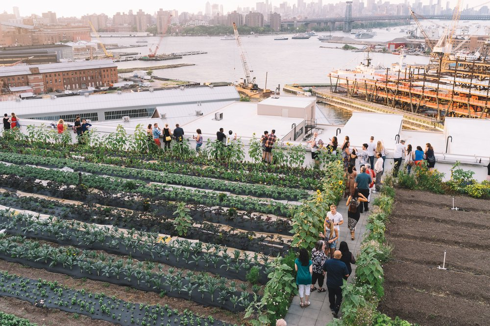 SOLD OUT - SPRING INTO SUMMER! CITY GROWERS' FUNDRASIER - As Spring gives way to Summer, we can all breathe a sigh of relief. The produce is fresh and local, the sun is warm, and the breeze is cool. It's the perfect time to head up to the roof of Brooklyn Grange's Navy Yard location and dine amongst the rows of arugula while raising funds for City Growers, the 501c3 non-profit organization educating kids on farms, in classrooms, and in school gardens around the city about environmental literacy!