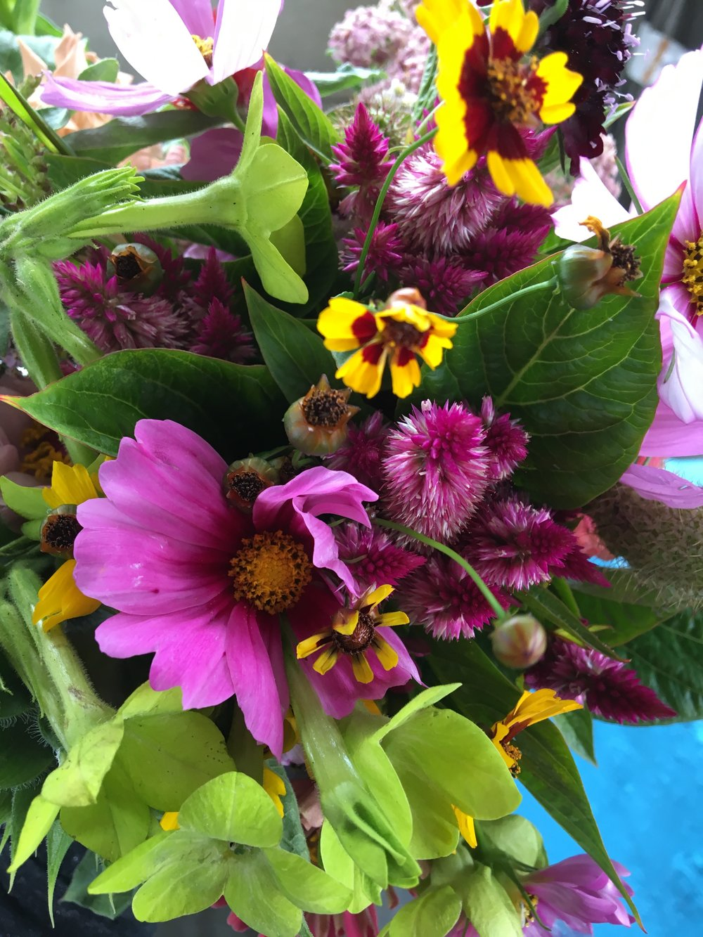 Flower CSA Sat July 29 2017.jpg