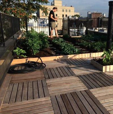 Veggie Roof