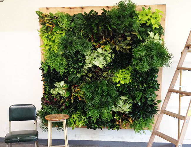 GREEN WALLS - Brooklyn Grange designs, builds and maintains indoor and outdoor green walls throughout the New York City area. We specialize in edible and ornamental green walls, and have designed and built green walls for private residences, hotels, office spaces, and university campuses.