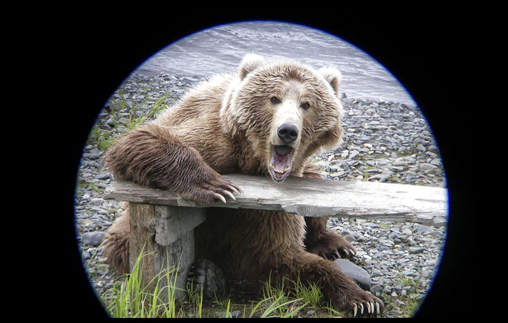 bear06.jpg