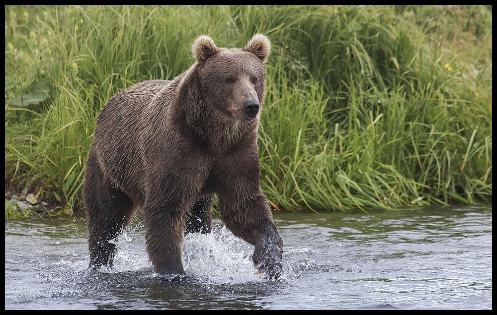 bear09.jpg