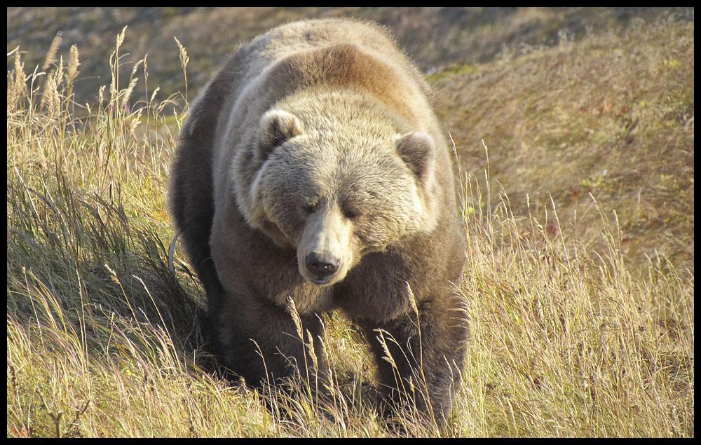 bear15.jpg