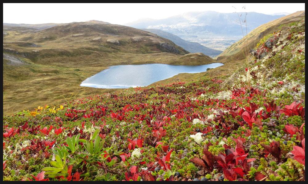 nature14.jpg