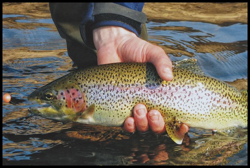 fishing23.jpg