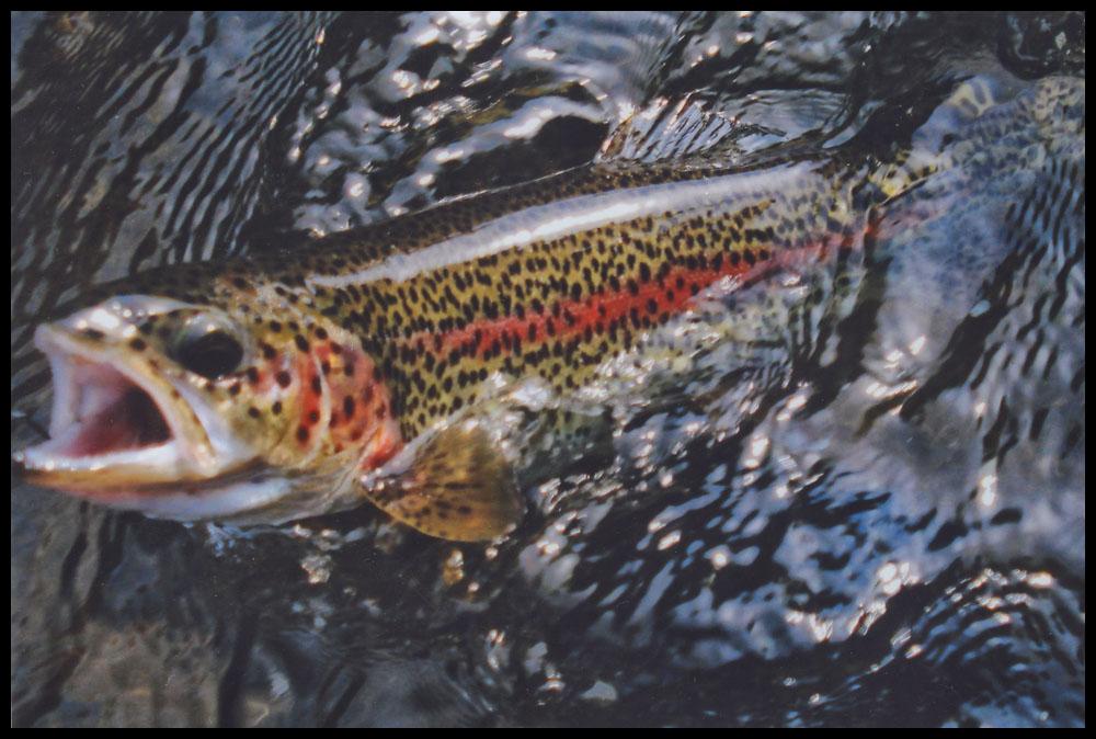 fishing24.jpg