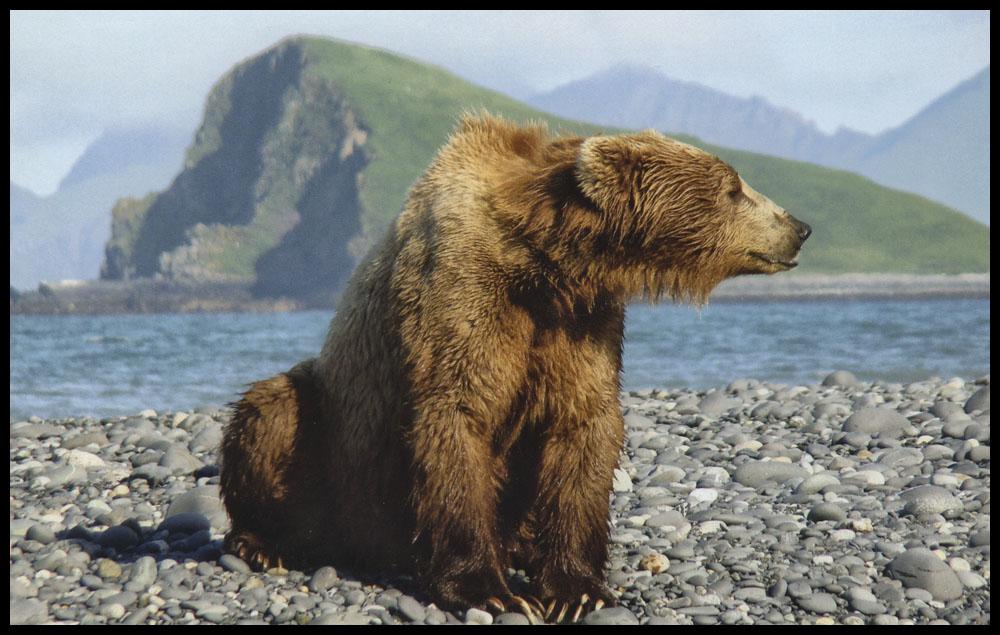 bear20.jpg