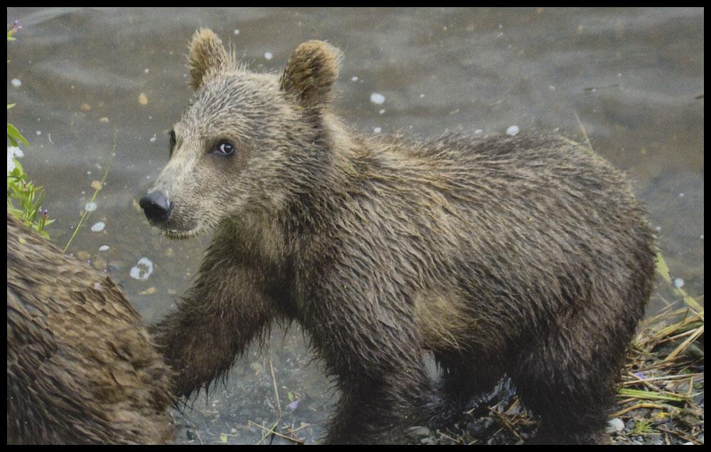 bear21.jpg