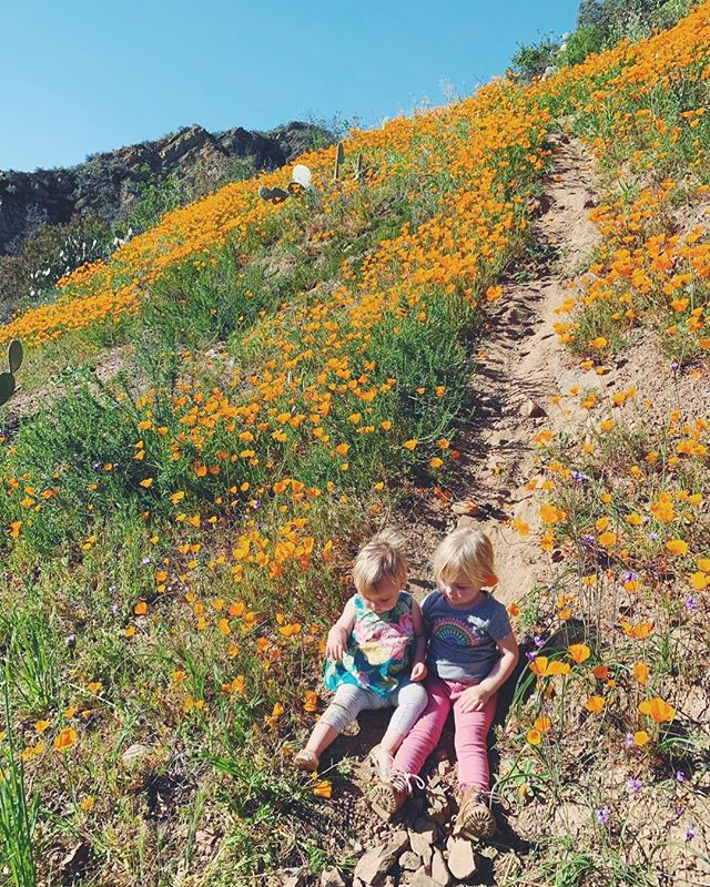 """Consider how the wildflowers grow: they don't labor or spin thread. Yet I tell you, not even Solomon in all his splendor was adorned like one of these. If that's how God clothes the grass, which is in the field today and is thrown into the furnace tomorrow, how much more will he do for you - you of little faith? Don't strive for what you should eat and what you should drink, and don't be anxious. But the Gentile world eagerly seeks all these things, and your Father knows that you need them."" ::Luke 12:27-30:: // found this patch on the side of the road near Silverado Canyon 🔅"