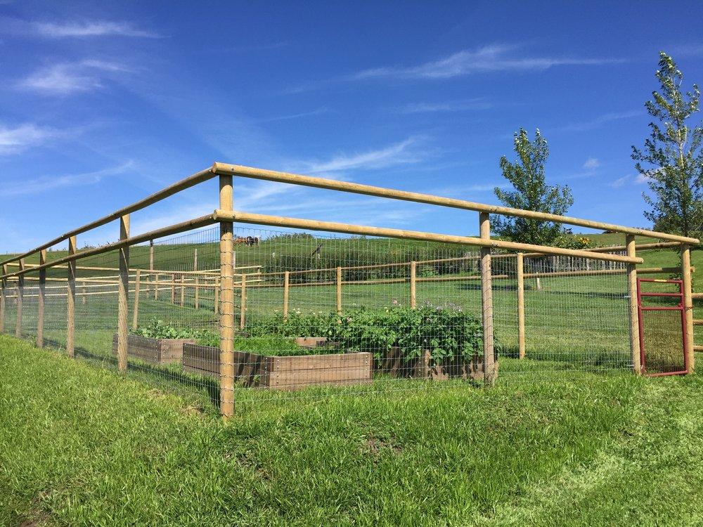 Garden Deer Fence Deer Fence To Protect The Vegetable Garden