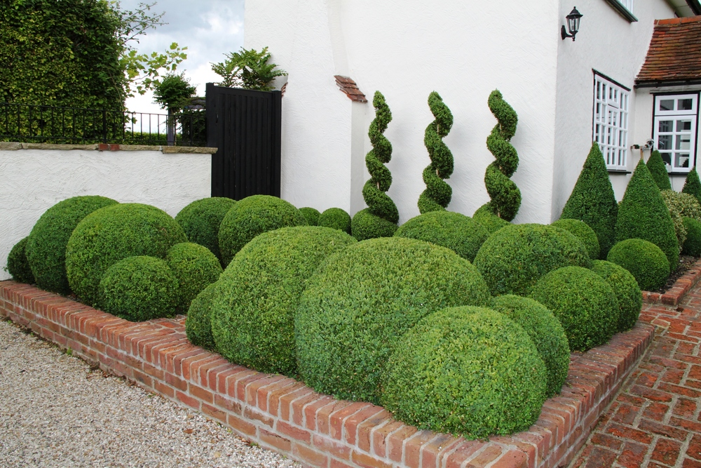 Delightful Topiary Box Part - 9: Box Cloud Hedging