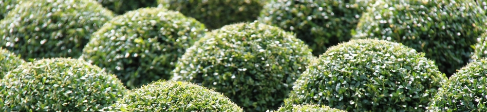 Crown Topiary balls and domes