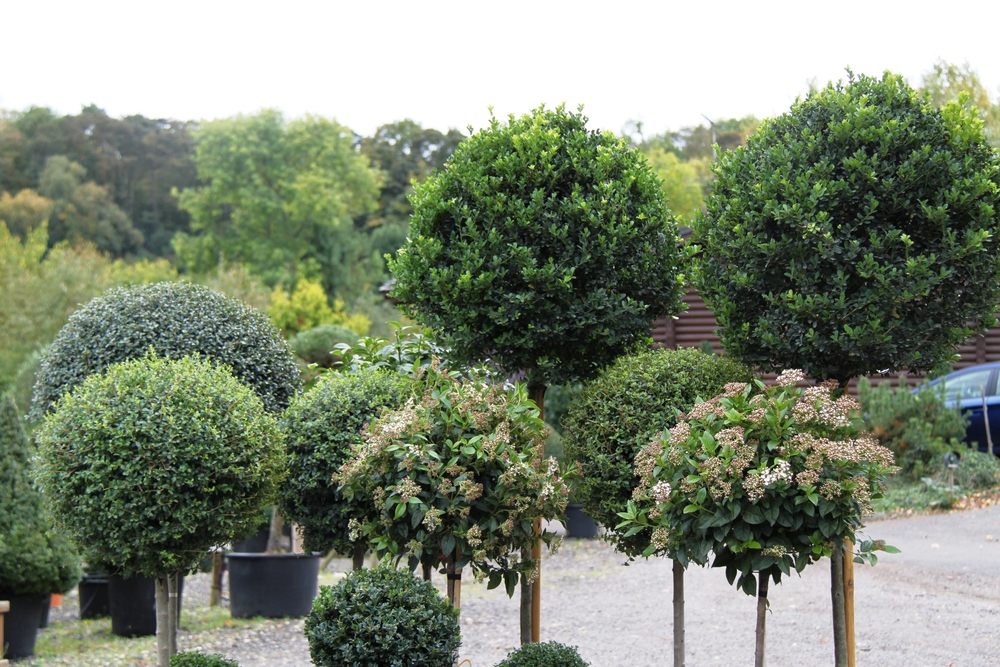 Topiary standards