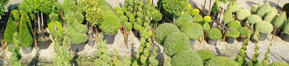 Crown Topiary's nursery