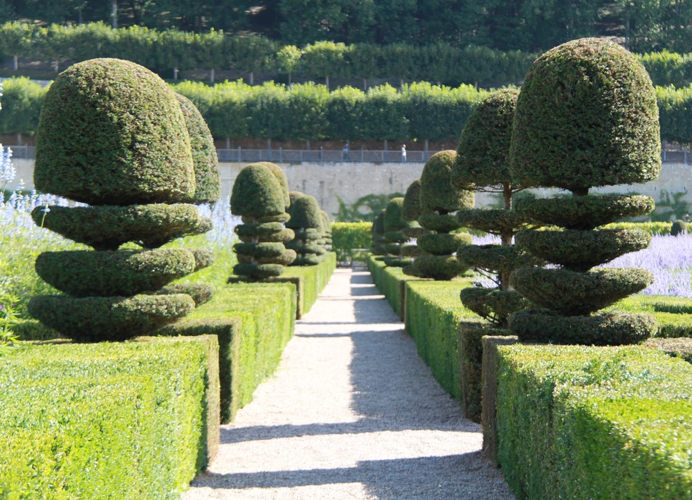 Topiary tours europe chateau villandry crown topiary for Ligustrum pompon
