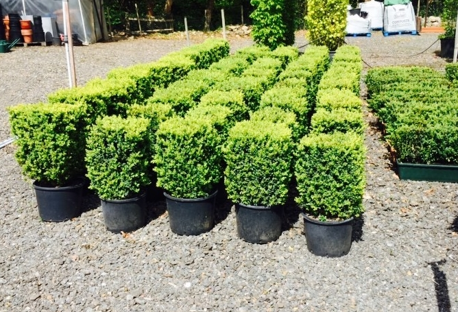 Box hedging blocks