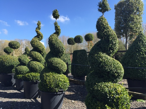 Some Of My Favourite Plants Crown Topiary