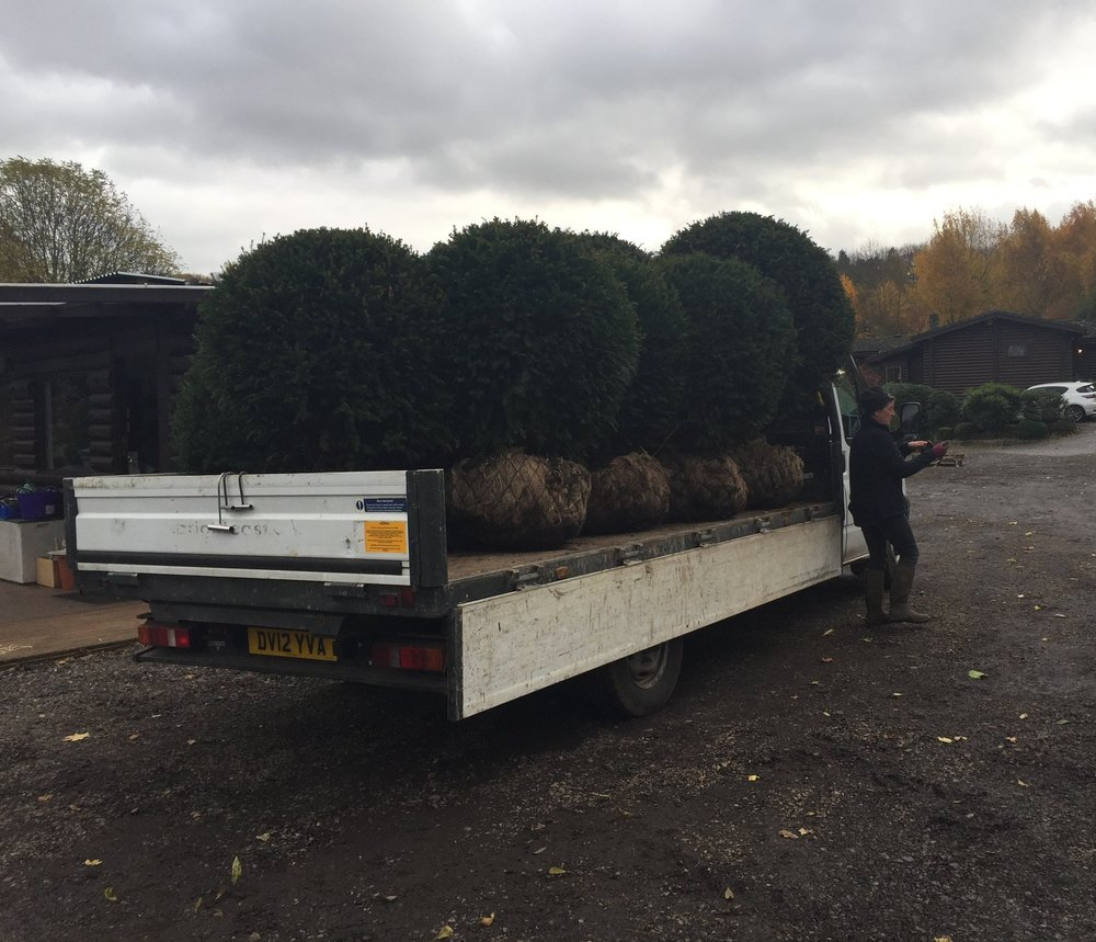 Yew balls on a flat bed lorry
