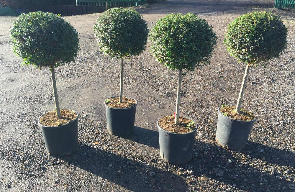 Privet mini standards