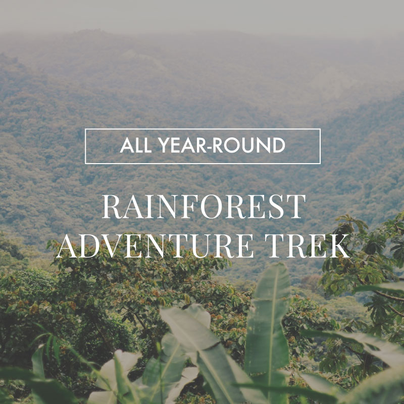 Experience Our Year-Round Rainforest Adventure Treks in Costa Rica