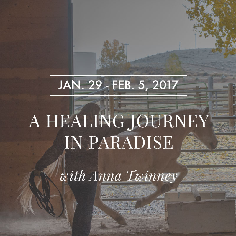 Animal Communication, Energy Healing and Horses Retreat with Anna Twinney