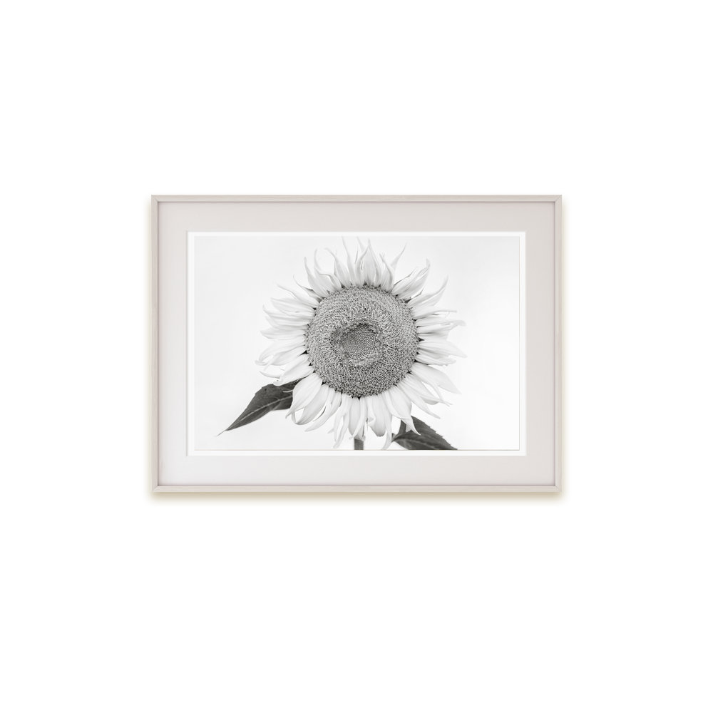 A rustic sunflower print in light toned black and white