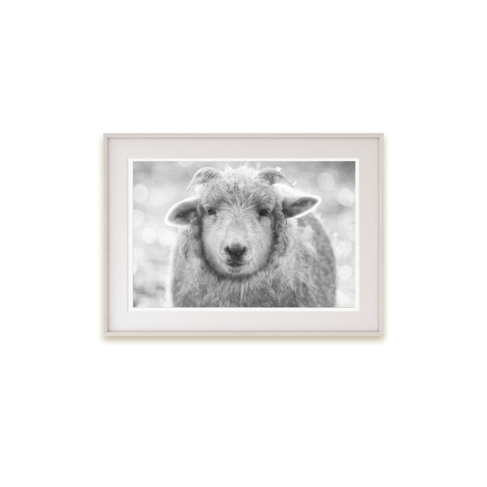 A happy sheep print (who doesn't love a sheep print?!)