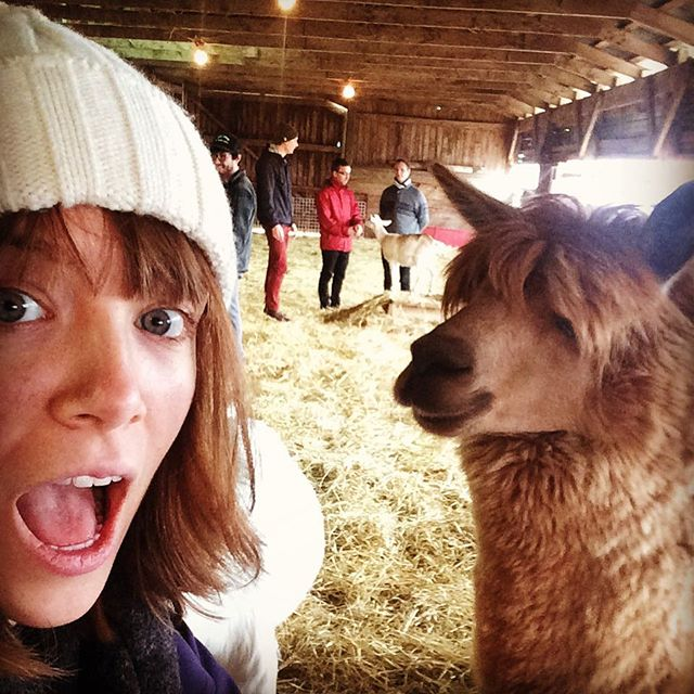 Made some new friends at Island Hill Farms in Charlottetown, PEI!
