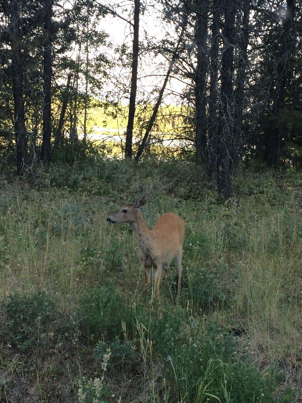 1 / 1,00,000 deer