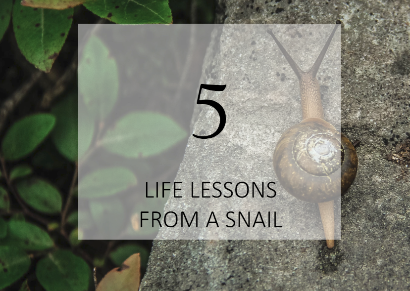 5_Life_lessons_from_a_snail.png